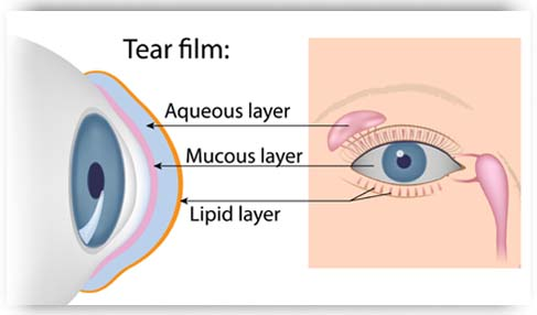 Layers of the Tear Film